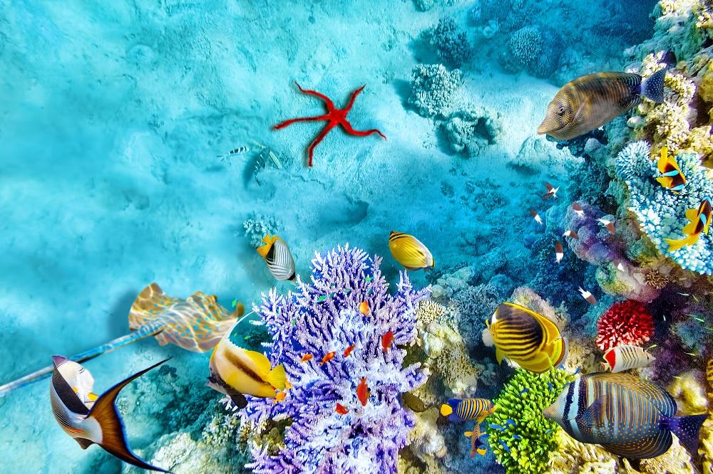 Почивка Почивка на Малдиви 01.03.2021 - специални цени - Малдивите са нарицателно за лукс, романтика, топлота,  нежност, релакс и природни красоти, невероятно е колко  много, представата, създадена от туристическата  реклама, напълно отговаря на това, което намирате тук.  Същото усещане за безвремие, същите цветове и гледки,  същата безтегловност на тялото и духа, океана, пясъка,  всичко е такова, каквото го видяхте в туристическата  брошура.....